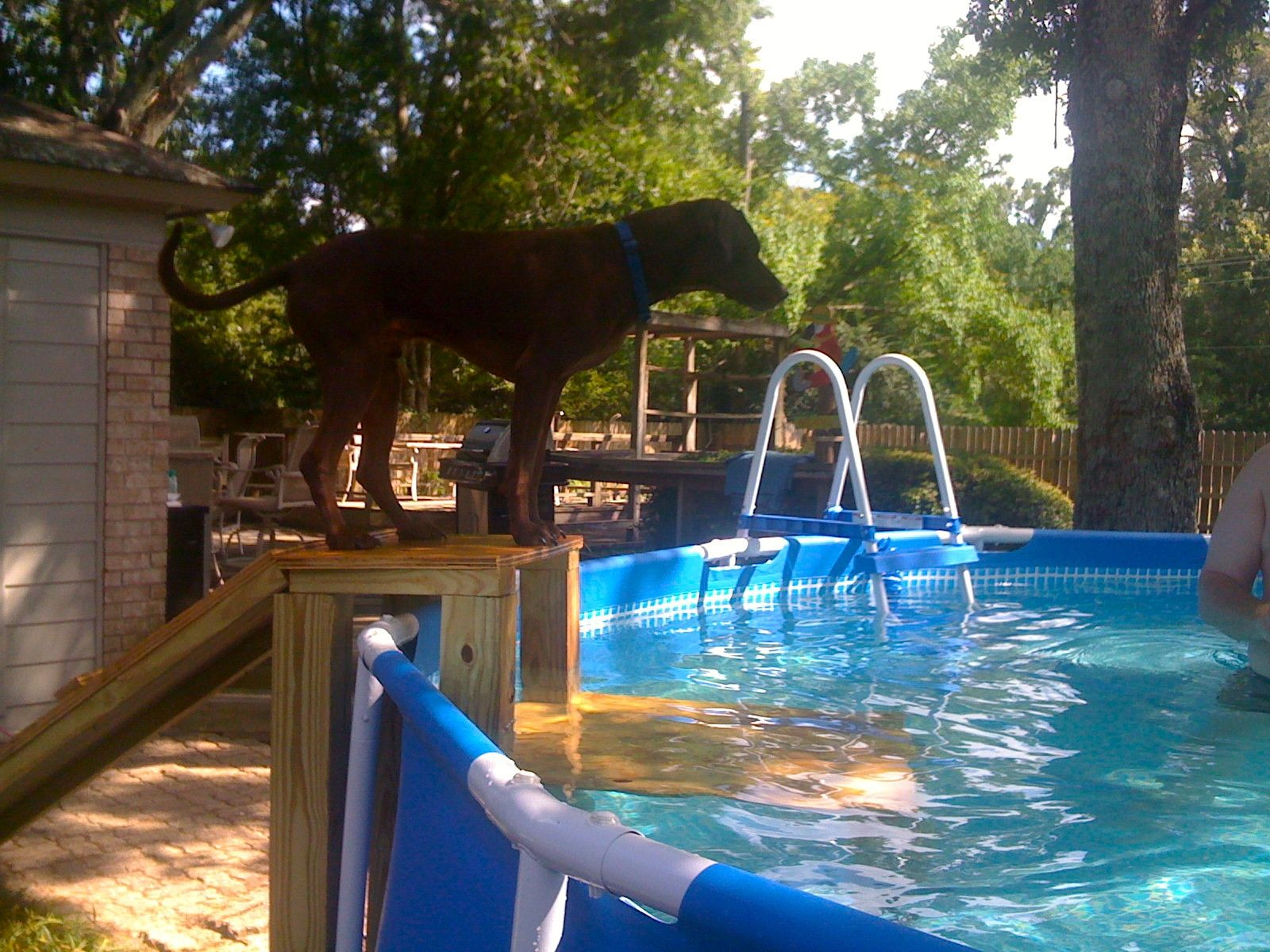 Unique Dog Ramp For Above Ground Swimming Pool 2 In 2019