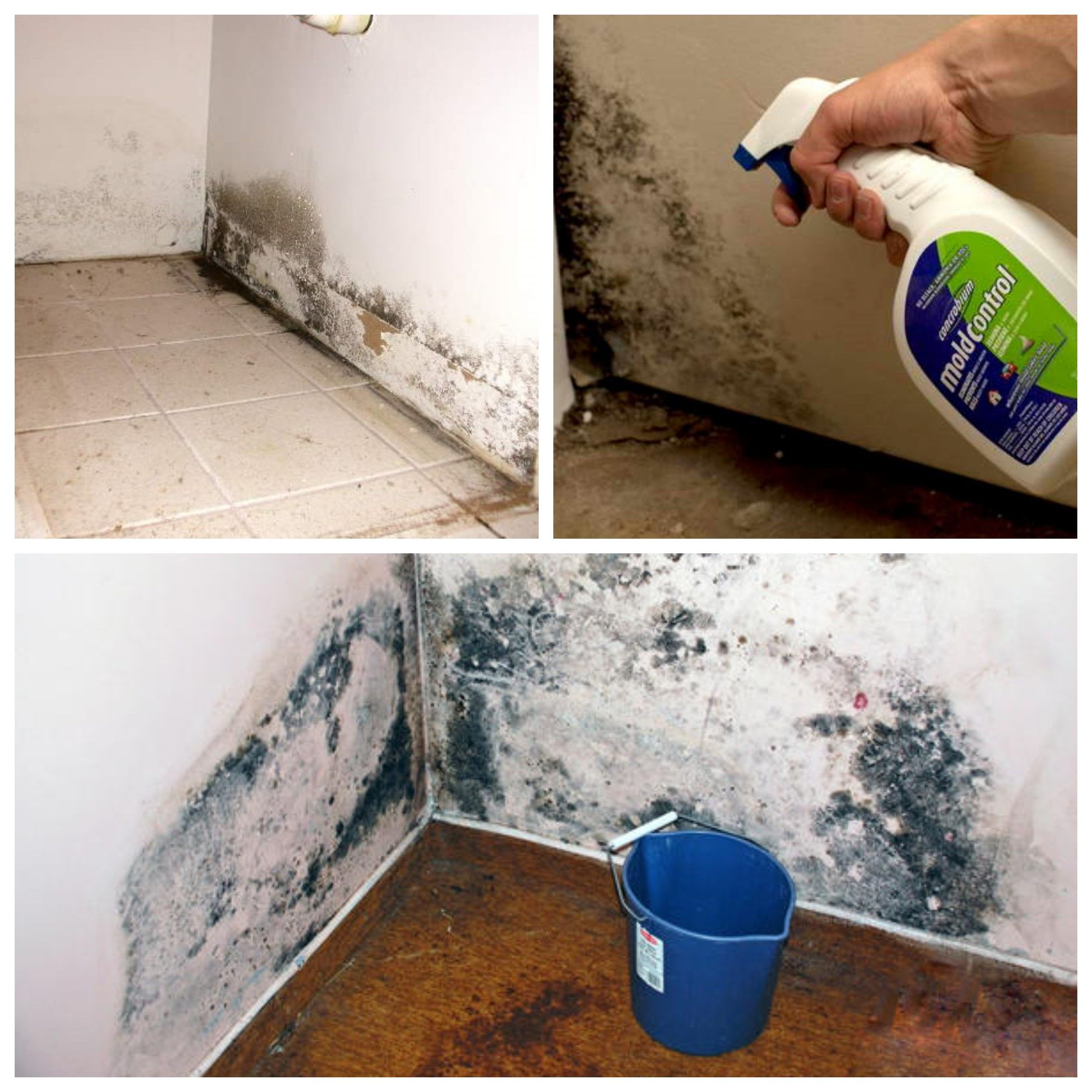 Kill Mold In Your Home Naturally Mold And Mildew Remover