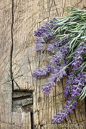 Lavender By Photomailbox Via Dreamstime Lavender Flowers Lavender Cottage Lavender Fields