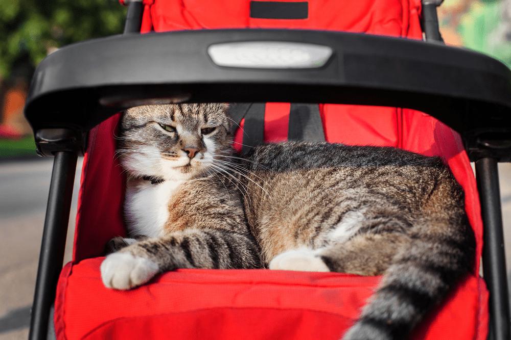 Best Cat Stroller 2018 Reviews Top Picks Cat Stroller Cats Cool Cats