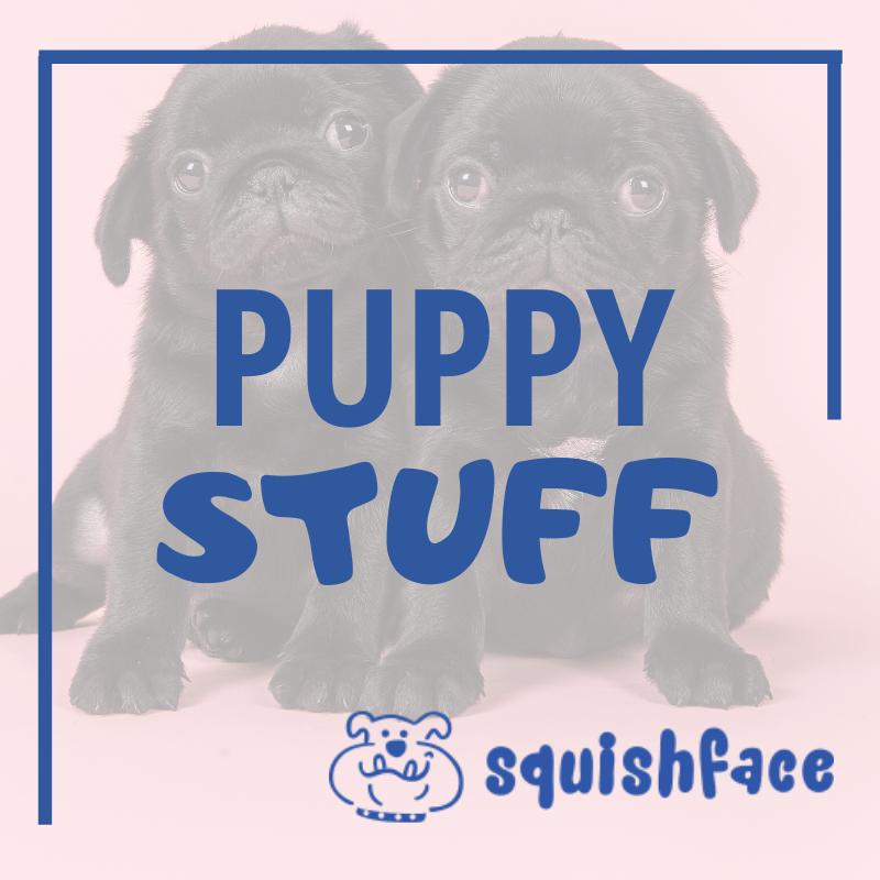 Squishface Dog Wrinkle Paste Dog Wrinkle Care in 2020