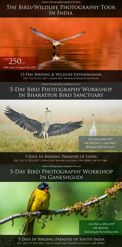 Bird Photography Workshop In Bharatpur Ganeshgudi India Photography Composition Techniques Photography Basics Photography For Beginners