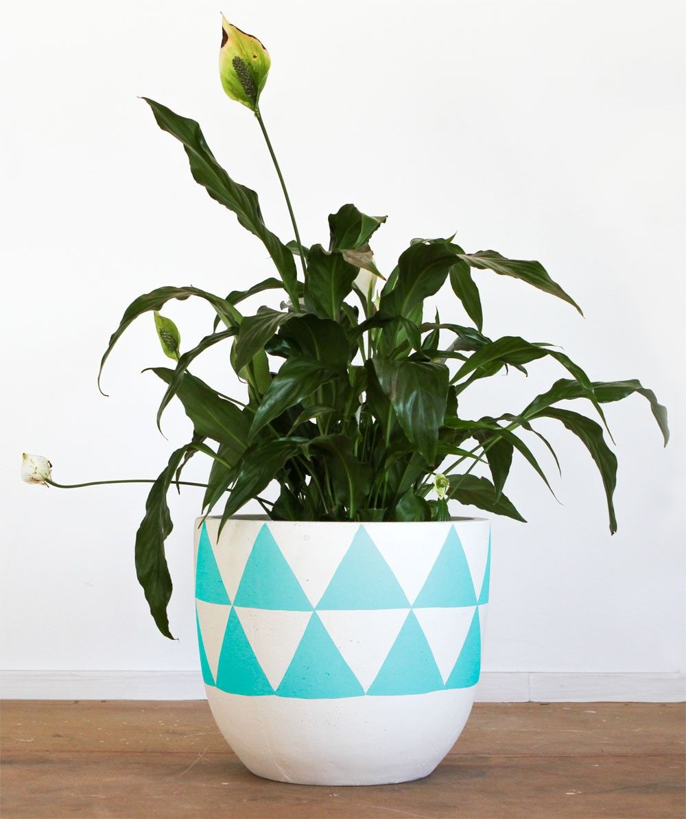 Pop scott aqua triangle pot buy pop and scott pots online australia pop scott aqua triangle pot buy pop and scott pots online australia workwithnaturefo