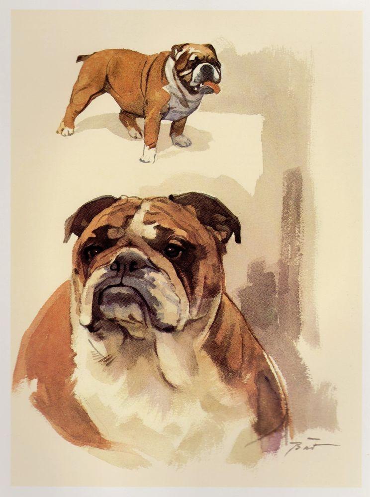 Vintage English Bulldog Print Dog Gallery Wall Art Beautiful Dog