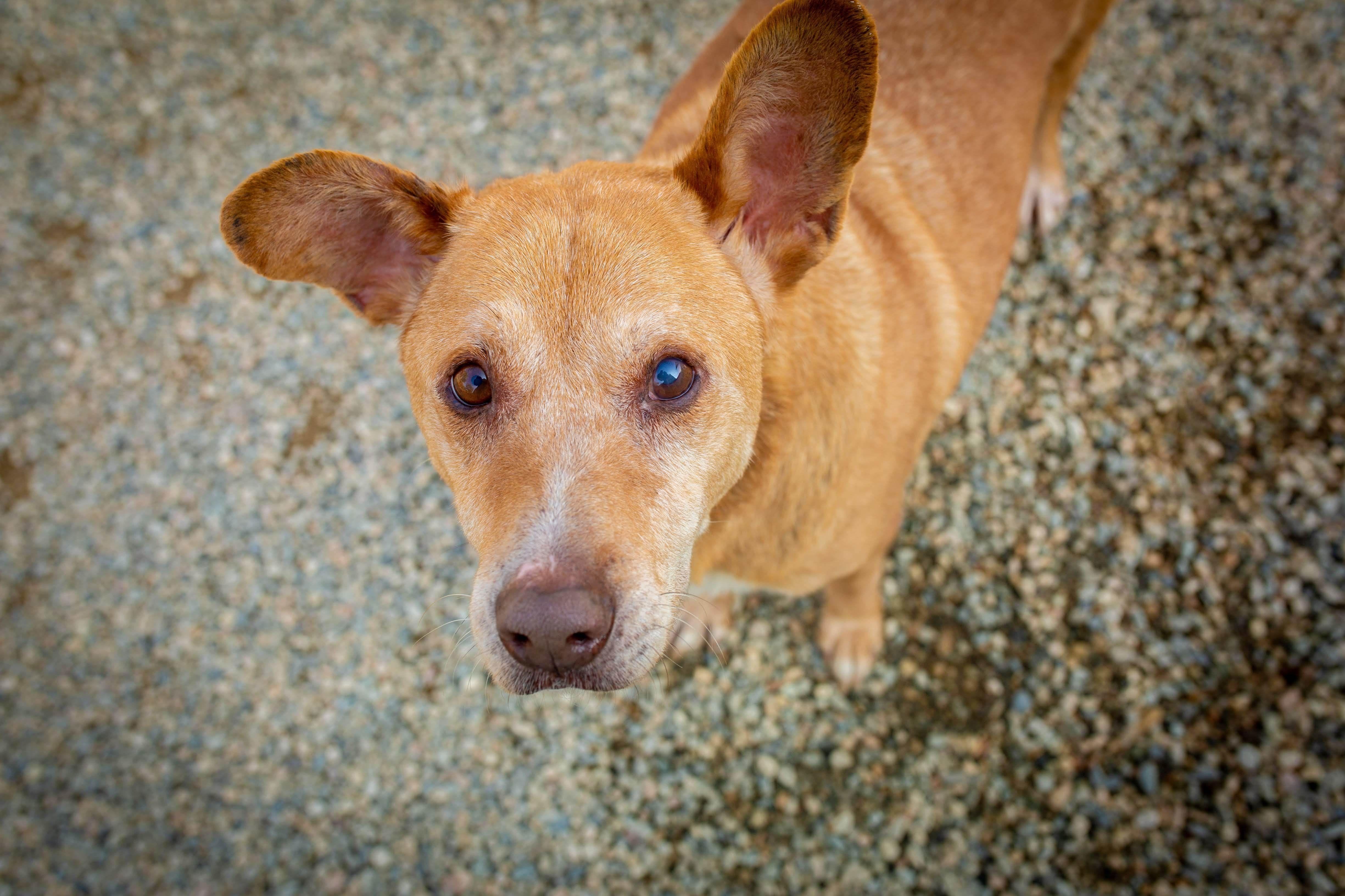 Adopt Browny on Pet adoption, Animals, Dogs