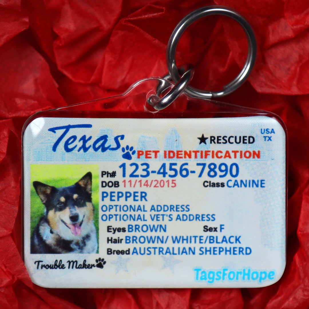 The Perfect Gift For Your Pet Video In 2020 Pet Identification Pets Your Pet