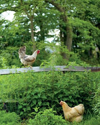 easy chicken stock