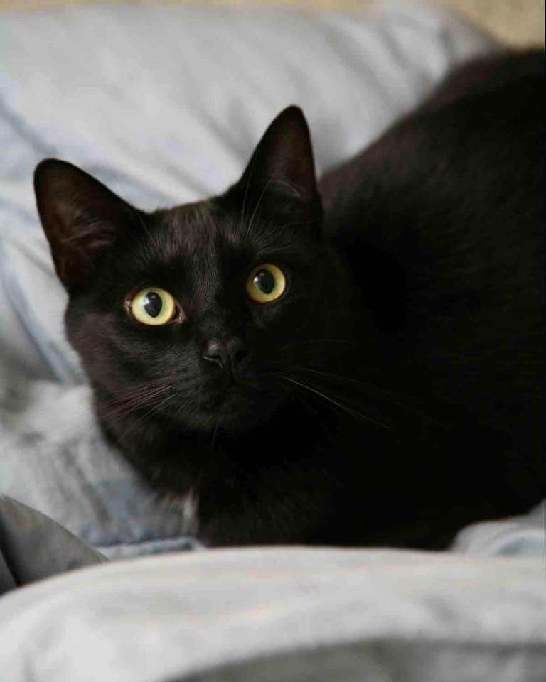 Pin by Bobby Schaefer Schaef Designs on Black Cats are