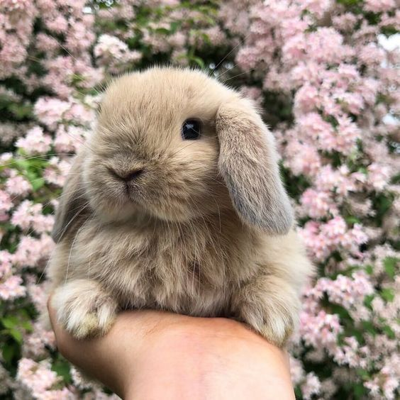 Rabbit; Animal; Pets; White Rabbit; Family Member; Cute Rabbit;Rabbit Photography; Rabbit Breeds; Rabbit Hutch