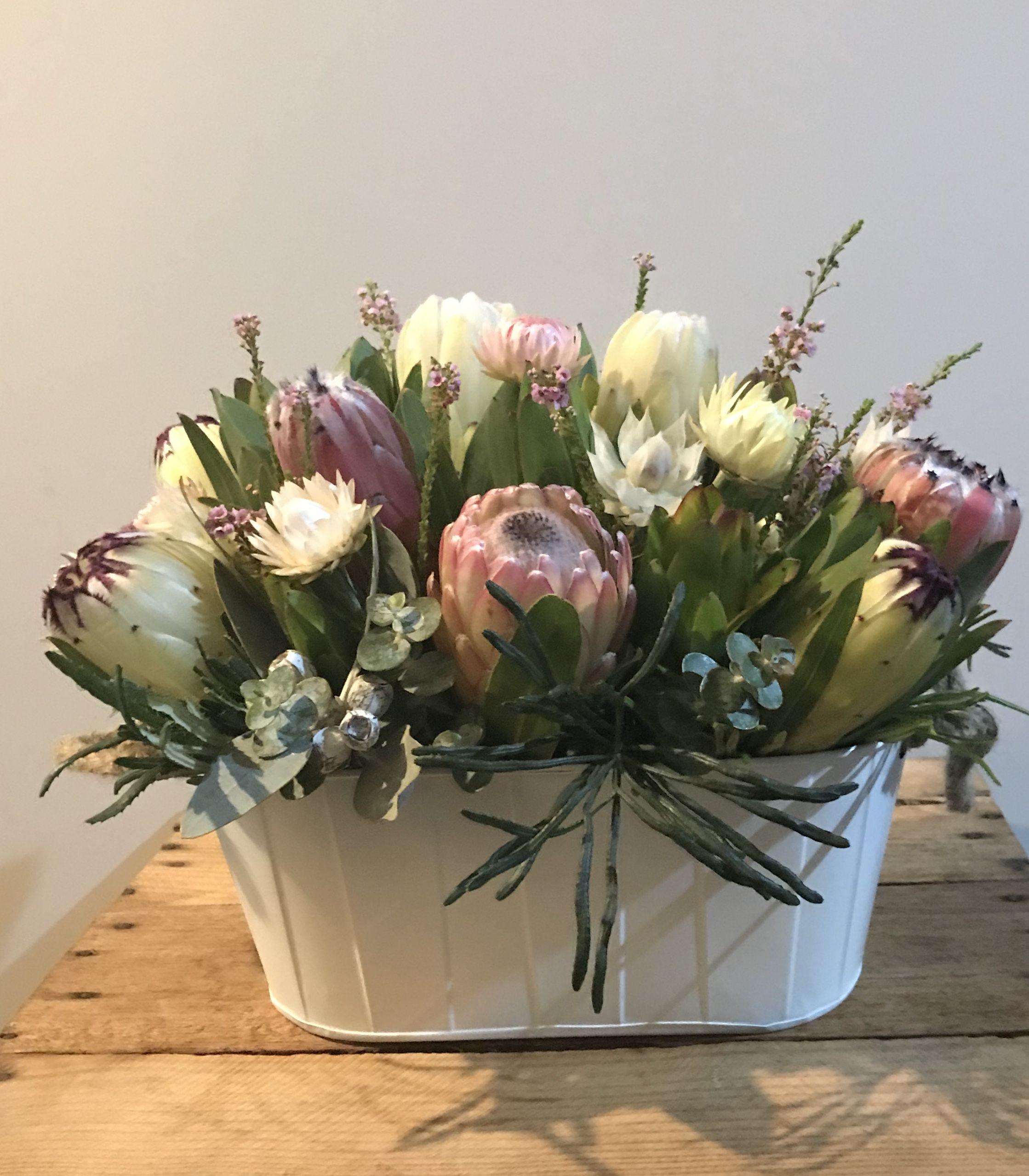 Pretty Protea Tin