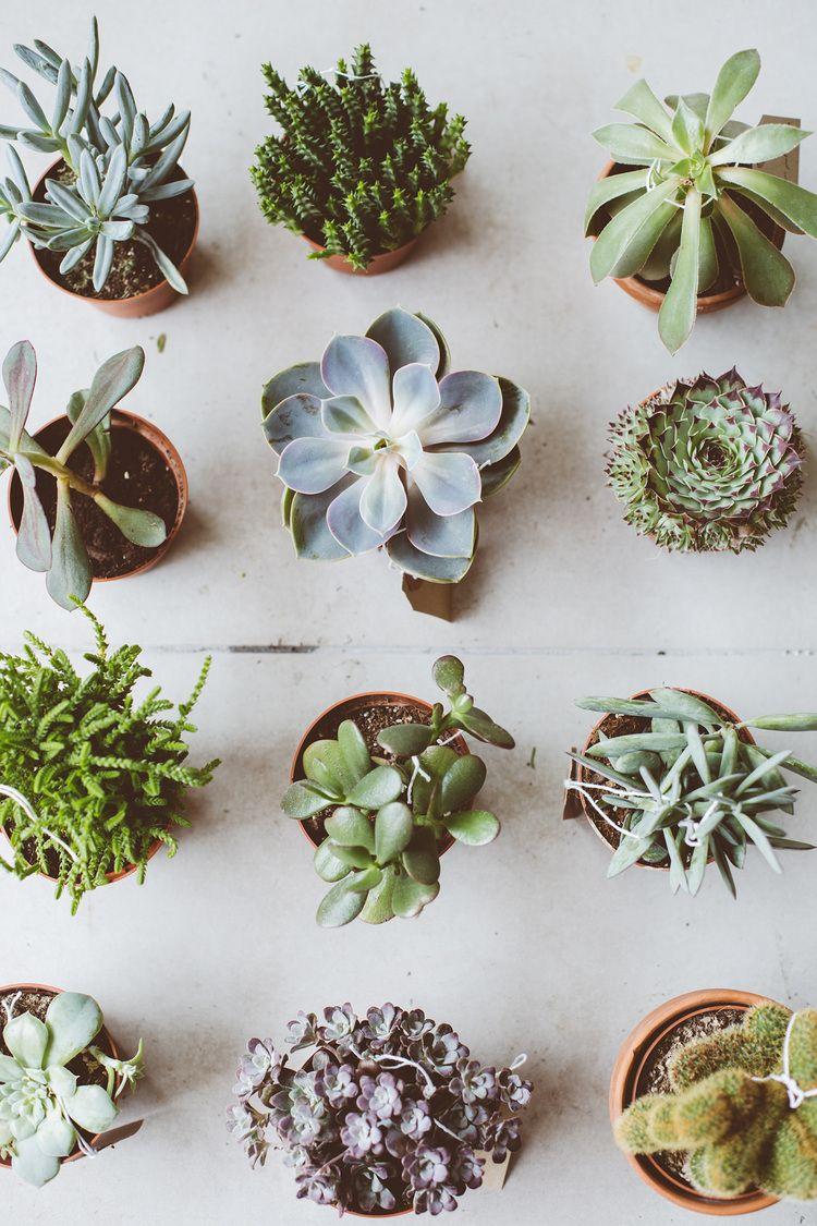 Toast botany pop up pflanzen gr n und kaktus for Green pflanzen