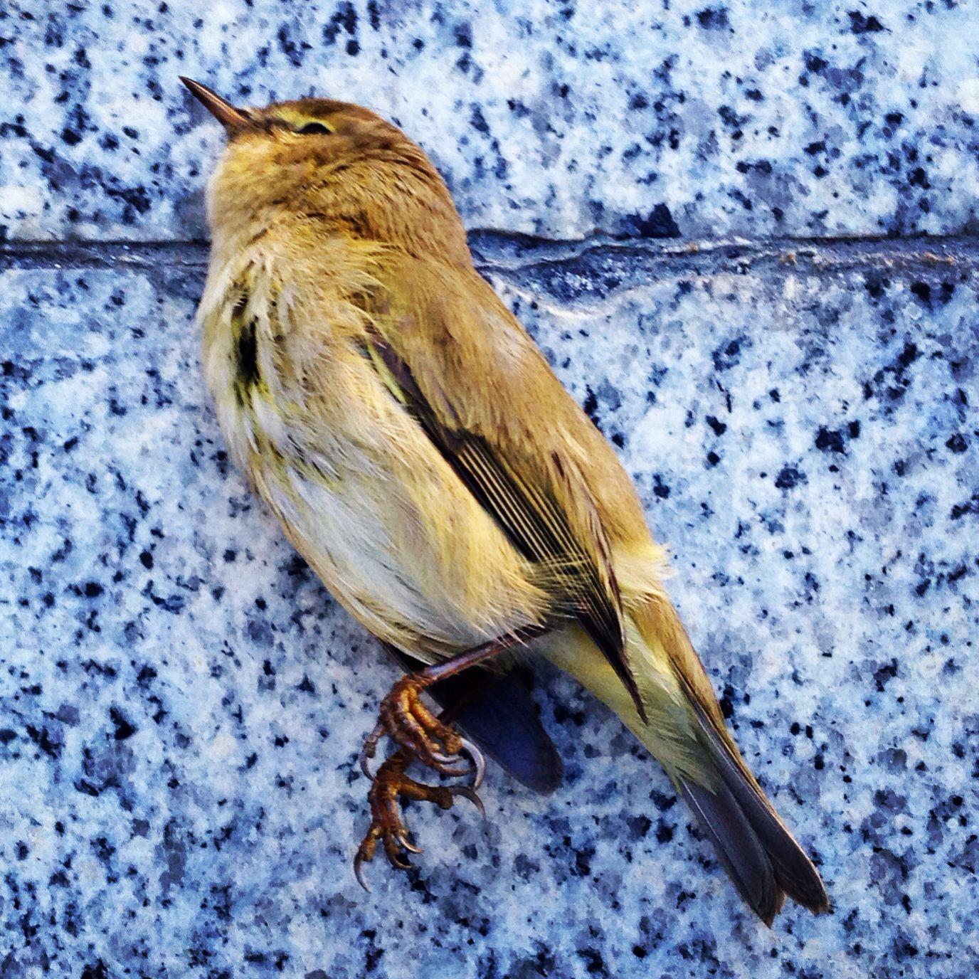 Dead Bird Bird Anatomy Art Nature Art