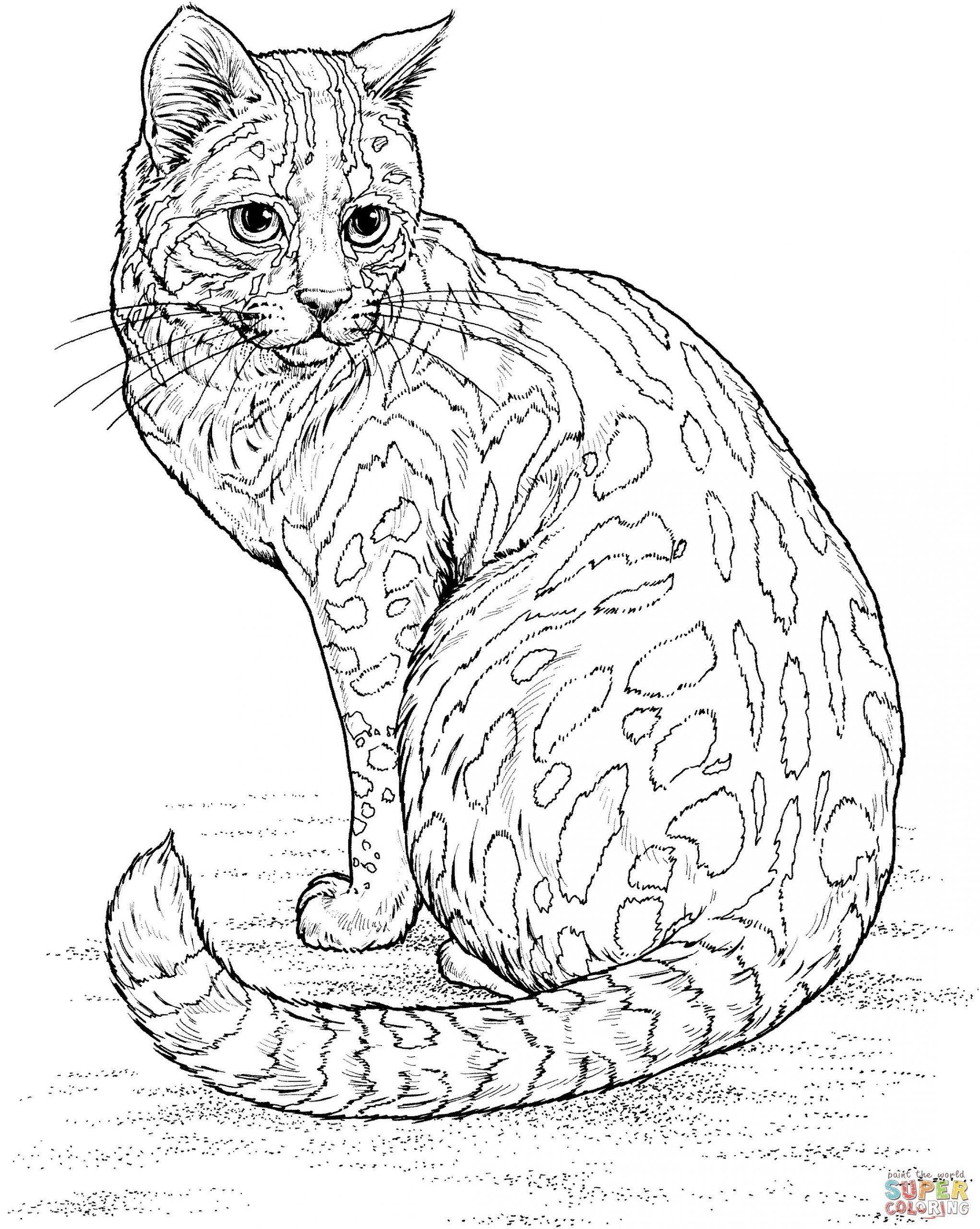 Realistic Cat Coloring Page Youngandtae Com In 2020 Cat Coloring Page Cat Coloring Book Dog Coloring Page
