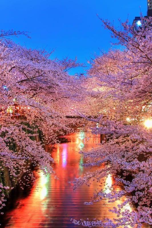 Magical Moments Blossom Trees Beautiful Nature Nature