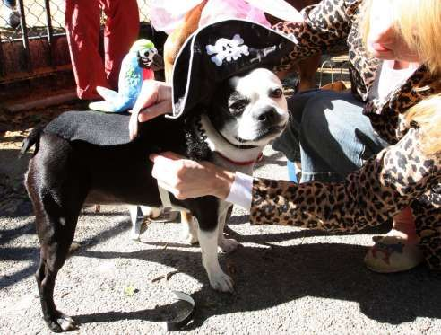 Dogs Participate During The Halloween Dog Show In Suburban Manila