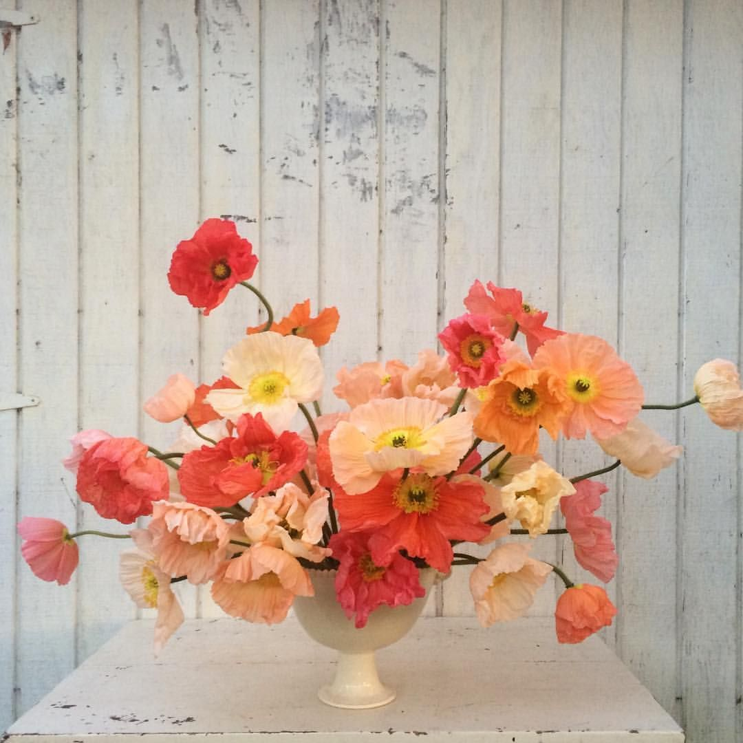 A mess of cheerful Iceland Poppies in my favorite Frances Palmer vase. The perfect way to end the day.#flowerfarmer #farmerflorist #floret
