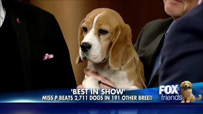 Brian Kilmeade Meets Miss P Beagle Named Westminster S Best In