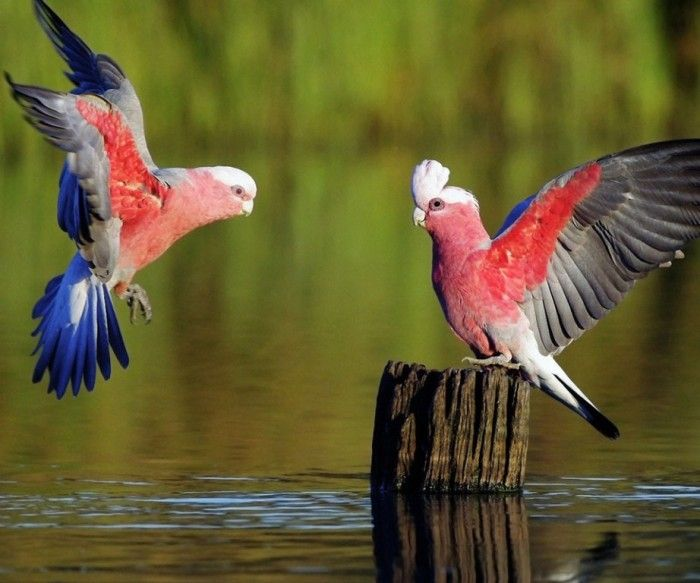 Improve Your Photography Skills Following These Tips Pouted Com Beautiful Bird Wallpaper Pet Birds Birds Wallpaper Hd