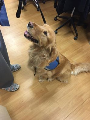 Hoppy Ampuversary to Dooley! Two years ago today he began life on three legs. He continues to inspire and comfort people as a Therapy Dog. He is the sweetest boy ever!