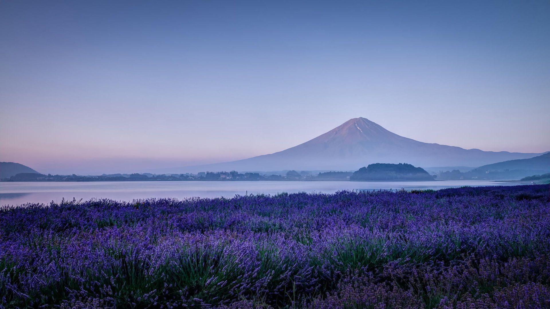 Japan Mt Fuji 日本 富士の山 ラベンダーの花 自然 朝 壁紙