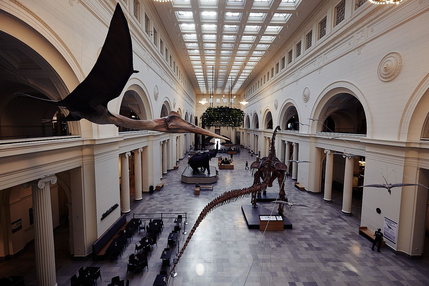 Another shot of the great hall inside the @FieldMuseum.   #mr_eaves #chicago #mychicagopix #chicagogram #igerschicago #insta_chicago #chitecture #wu_chicago #enjoyillinois #chitown #chigram #windycity #likechicago #illinois #choosechicago #chicity_shots #chiarchitecture #chicagoshots #explorechicago #thisischicago #chicagolife #instachicago #chicity #midwestmoment