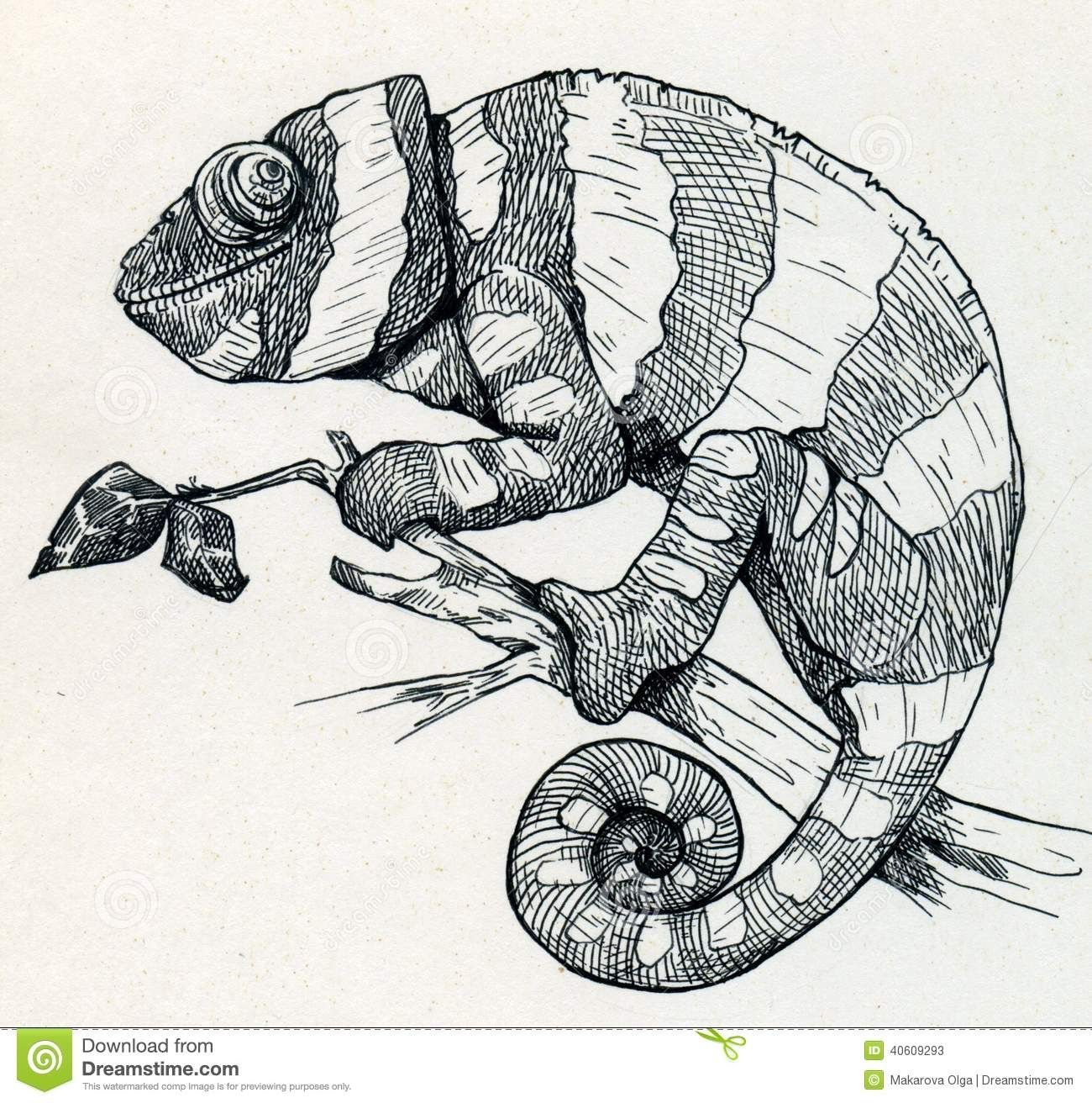chameleon drawing - Google Search | Illustrations ...