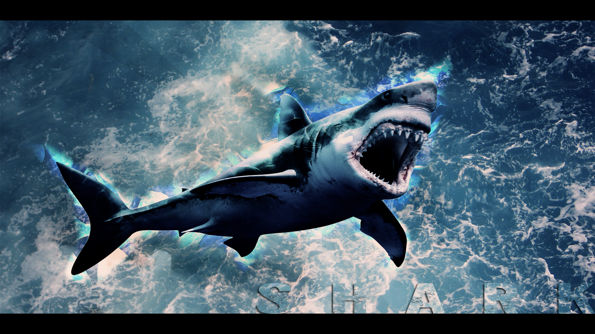 Amazing Shark Background 50 Wallpapers Hd Wallpapers