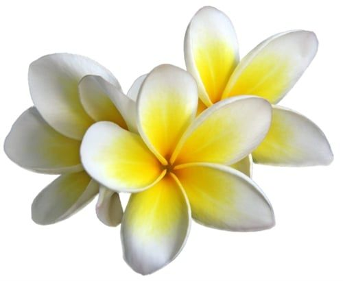 Photo Of Spa Evo Durango Co United States The Tiare Flower