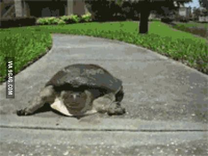 I now present you... super turtle.
