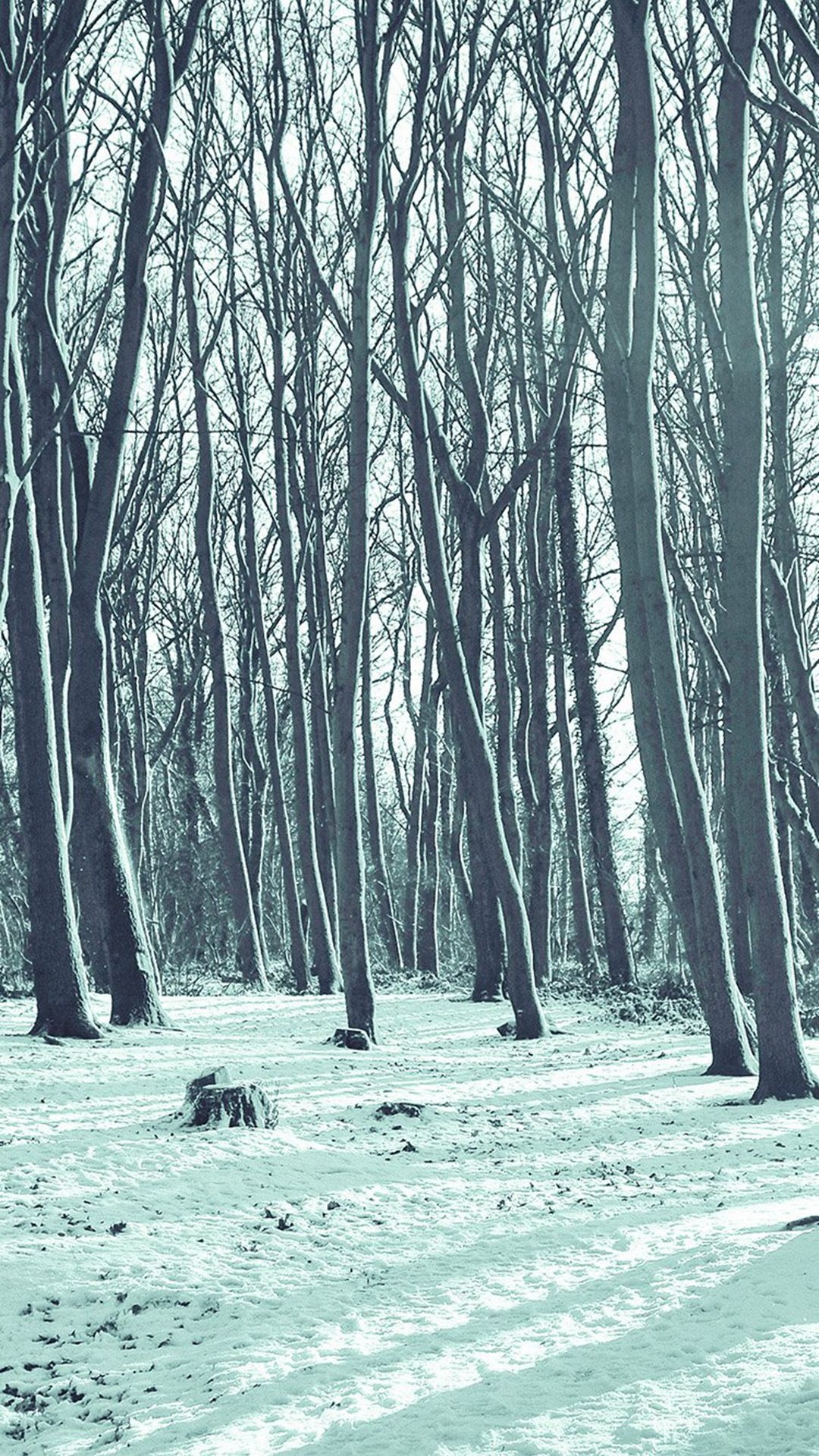 Wallpaper iphone winter - Cold Winter Forest Snow Nature Mountain Blue Iphone 6 Wallpaper