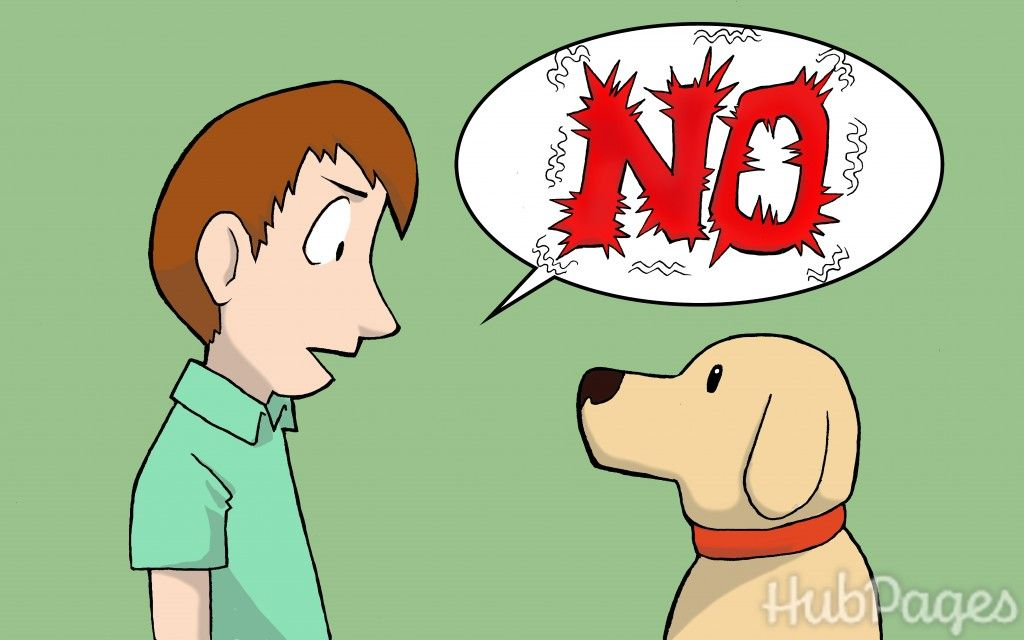 How To Get Your Dog To Stop Peeing All Over The House Dogs