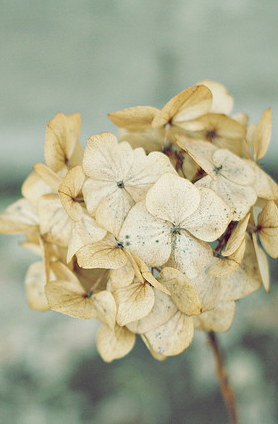 .dried and still beautiful