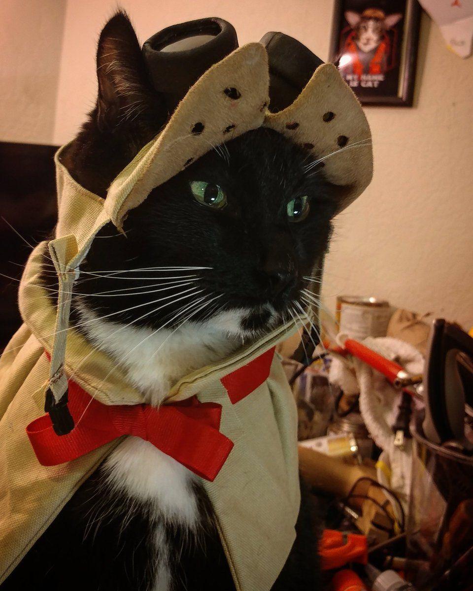 Cat Cosplay On In 2019 Critter Art Monster Hunter Cosplay