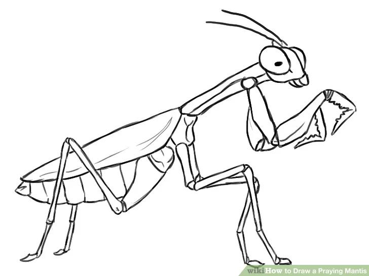 How To Draw A Praying Mantis Praying Mantis Sketches Coloring Pages