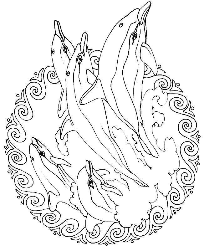Mandalas De Animales Para Colorear Faciles Dibujado A Mano