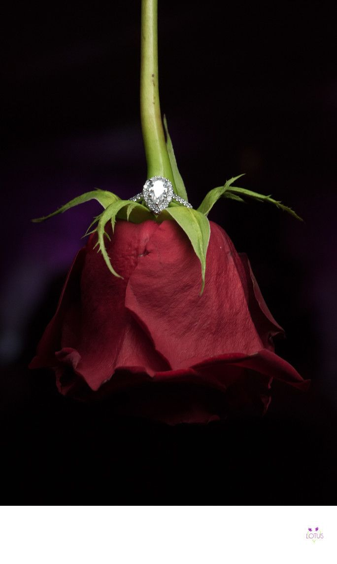 - Long Island Wedding Photo - Creative Engagement Ring: This wedding photo of an engagement ring on a red rose,  is a creative and symbolic way to show off the exquisite pear shaped engagement ring. A classic single red rose has been way to provide an expression of love through out the ages. As all flowers carry a meaning with them, so does the most popular red rose. A bright red rose symbolizes love, loyalty and passion. The ring that hugs the roses stem offers a promise of forever, to…