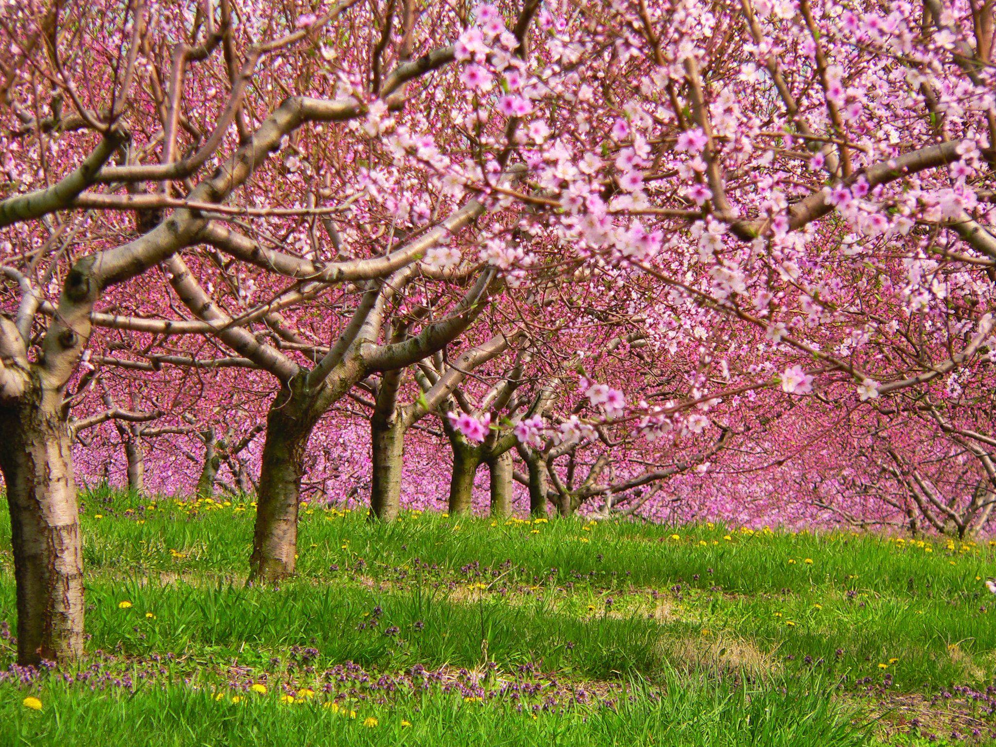 Home Meg Mims Spring Wallpaper Orchard Garden Garden Inspiration