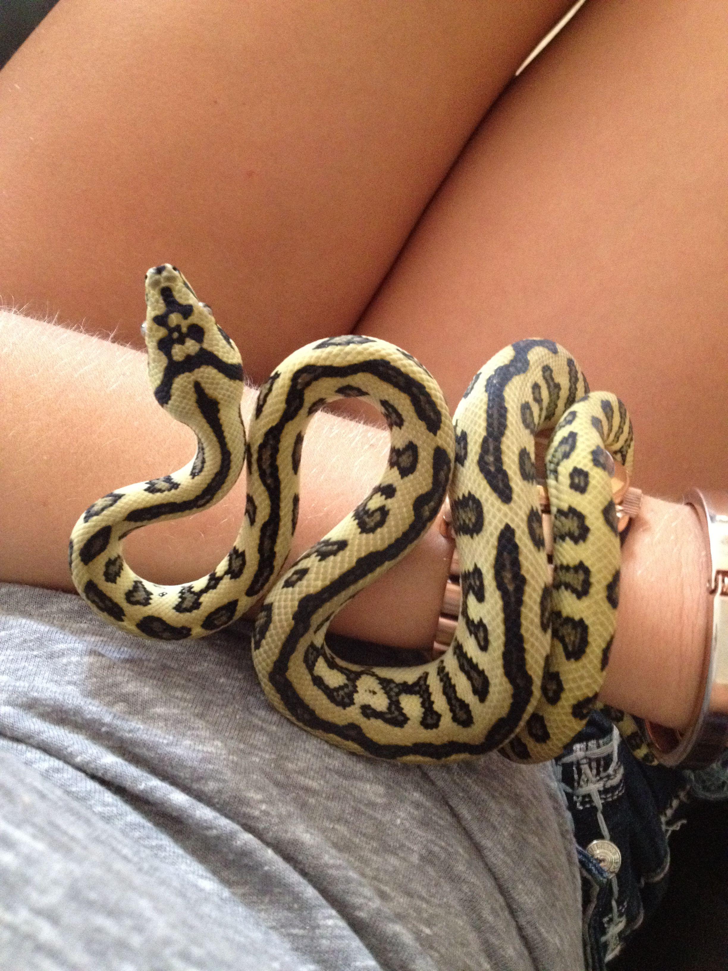 Jungle jag Snake, Animals