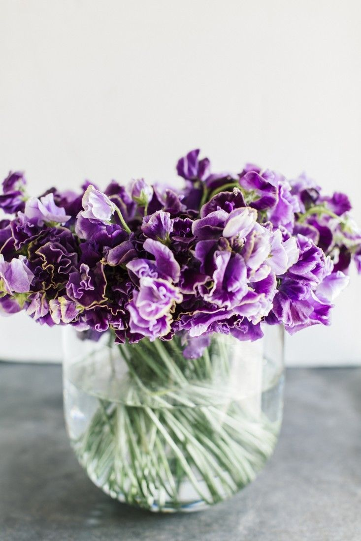 Violet-colored sweet peas from Winston Flowers.