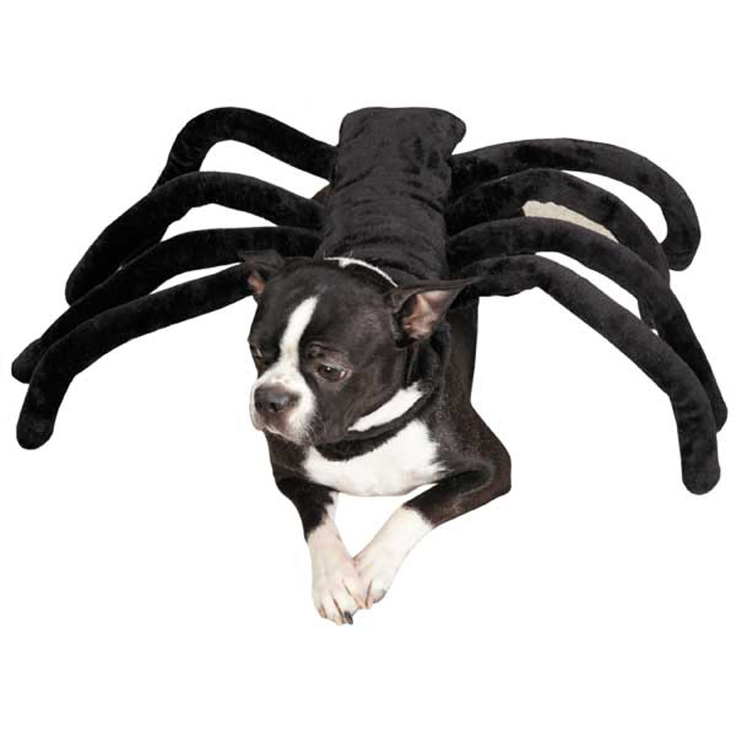 Dog  sc 1 st  Pinterest & Grr-antula Dog Halloween Costume at BaxterBoo | For the Love of ...