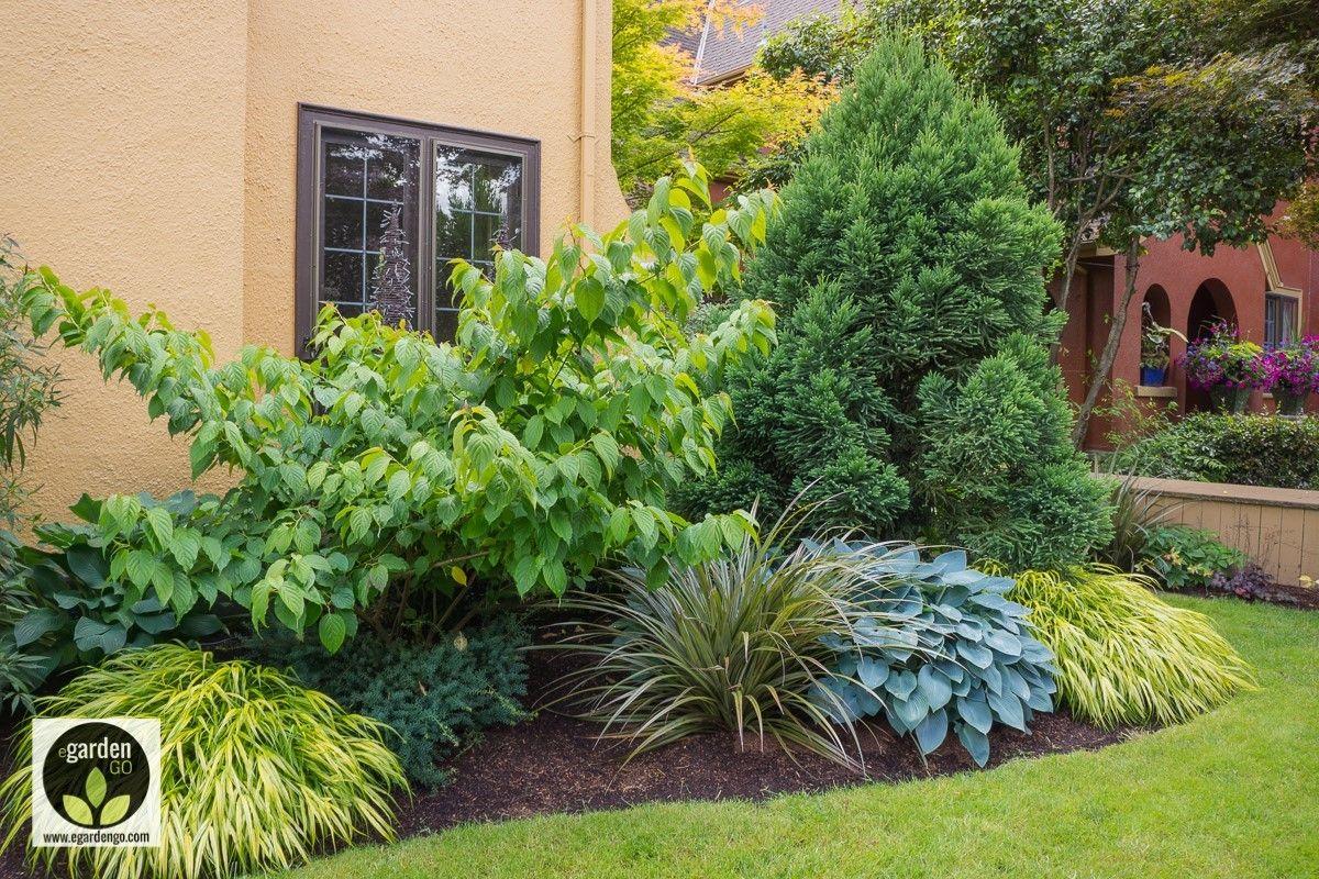 Conifers And Perennials Plants Garden Design Plans Front Yard Garden