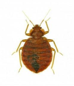 f67826abd7e2c81c16eba5142afef16a - How To Get Rid Of Bugs Biting Me At Night