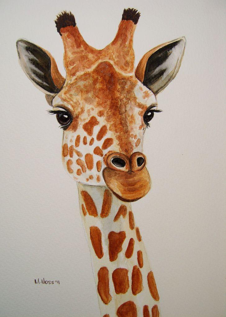 Giraffe Portrait In Watercolour Giraffe Painting Pencil
