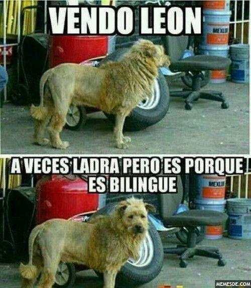 Perros Graciosos Http Enviarpostales Es Perros Graciosos 341 Perros Animales Pinterest Memes Memes Funny Spanish Memes