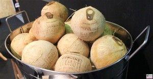 Kokosnuss Genuine Coconut mit oeffner FRUIT LOGISITICA Spanien Barcelona Messe Berlin Funkturm