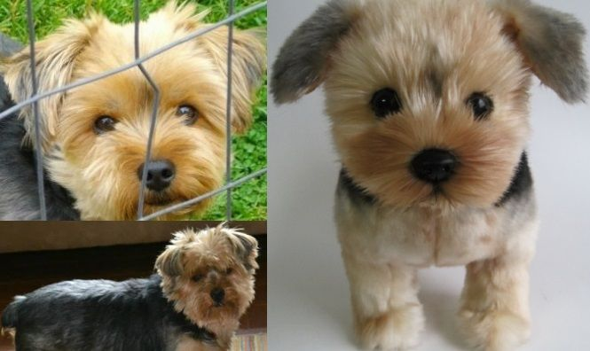 100 Custom Stuffed Animals Made To Look Just Like Your Pet They