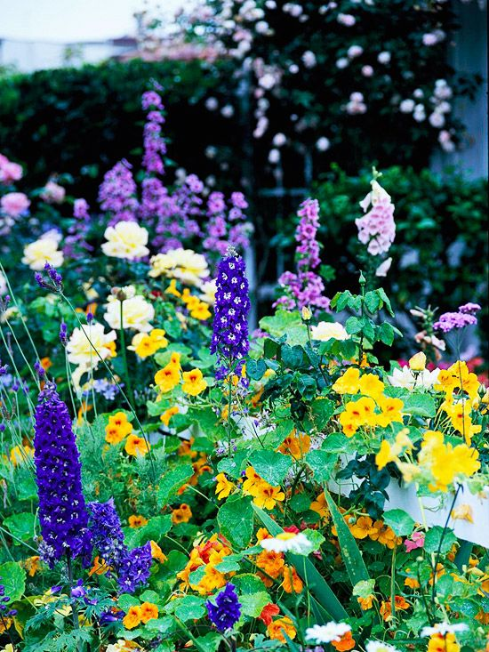 Complementary combos in purple and yellow cottages and gardens start with tall spiky foxgloves shown in pink and light purple and spires of deep purple delphiniums add contrast with rounded shapes mightylinksfo