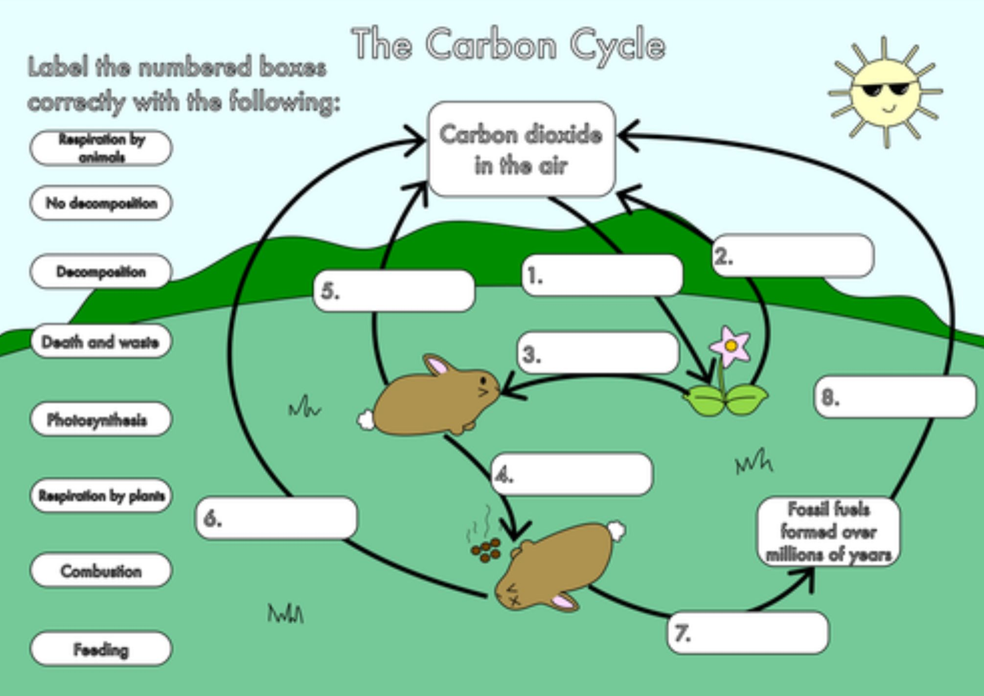 The Carbon Cycle Worksheet 1 Thursday May 23 2019 Carbon Cycle Nitrogen Cycle Biology Classroom