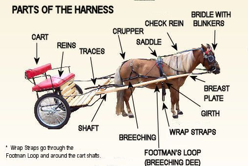 Parts Of The Single Harness Horse Bridle Breyer Horses Gear