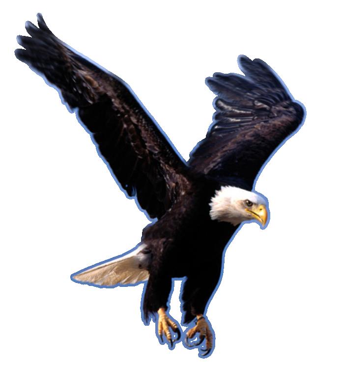 Pin By Abhishek Amminabavi On Allatok Eagle Images Eagle Wallpaper Eagle
